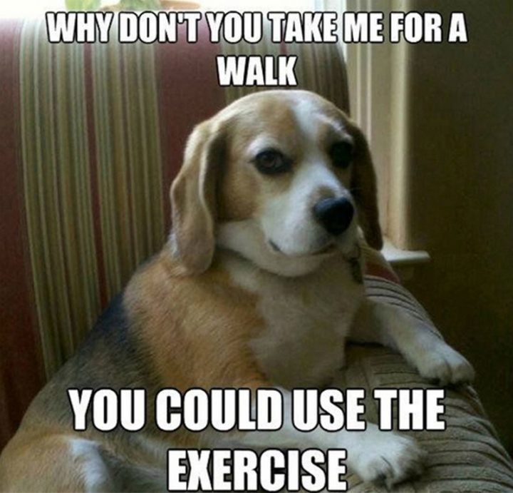 "101 best funny dog memes - ""Why don't you take me for a walk. You could use the exercise."""