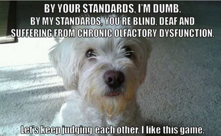 "101 best funny dog memes - ""By your standards, I'm dumb. But my standards, you're blind, deaf and suffering from chronic olfactory dysfunction. Let's keep judging each other. I like this game."""