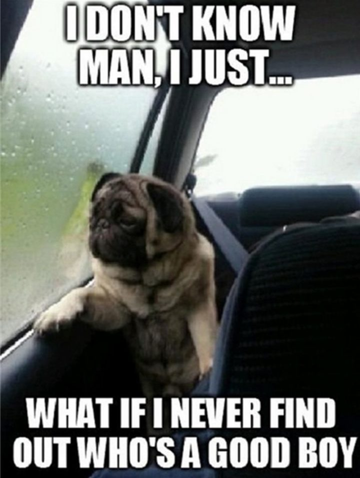 "101 best funny dog memes - ""I don't know man, I just...What if I never find out who's a good boy."""