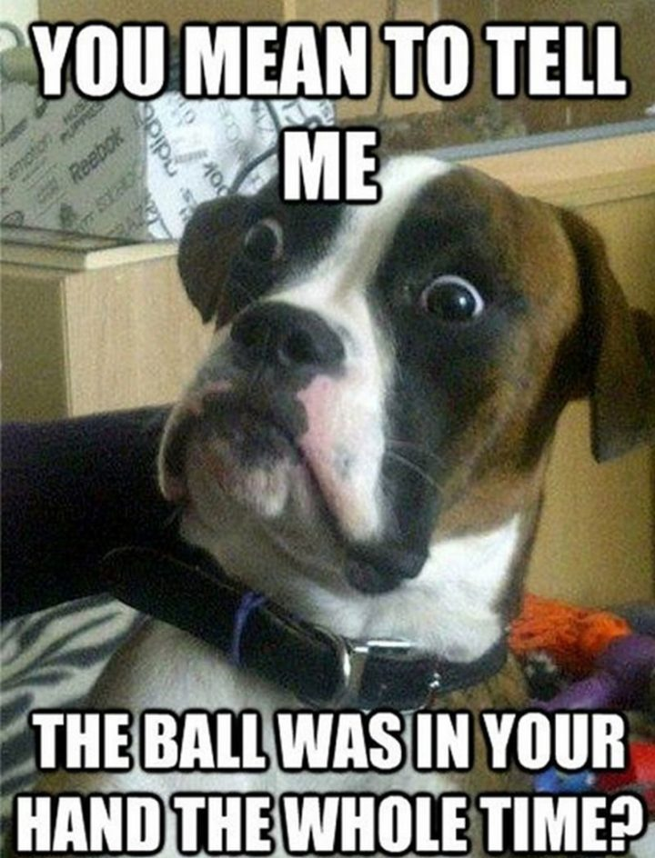 "101 best funny dog memes - ""You mean to tell me the ball was in your hand the whole time?"""