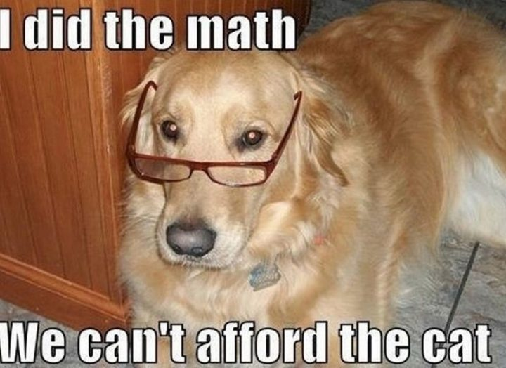 "101 best funny dog memes - ""I did the math. We can't afford the cat."""