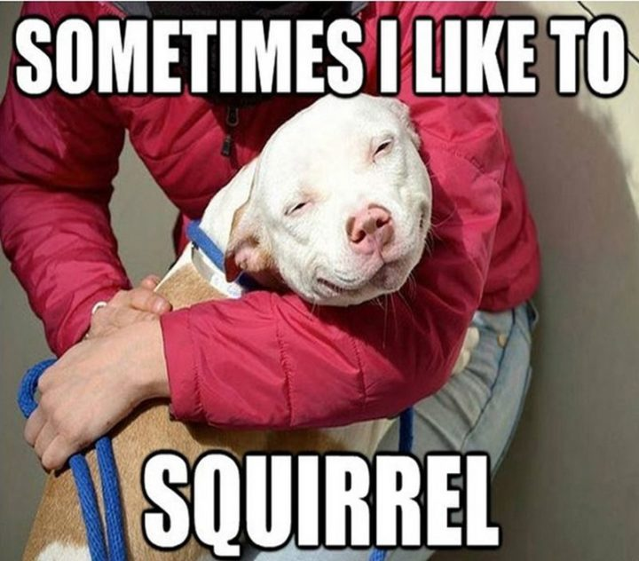 "101 best funny dog memes - ""Sometimes I like to squirrel."""