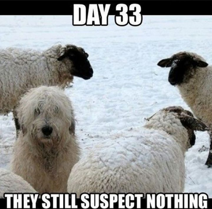 "101 best funny dog memes - ""Day 33. They still suspect nothing."""