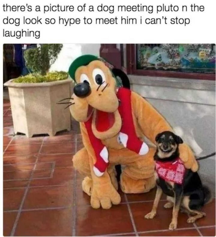 "101 best funny dog memes - ""There's a picture of a dog meeting pluto n the dog look so hype to meet him I can't stop laughing."""