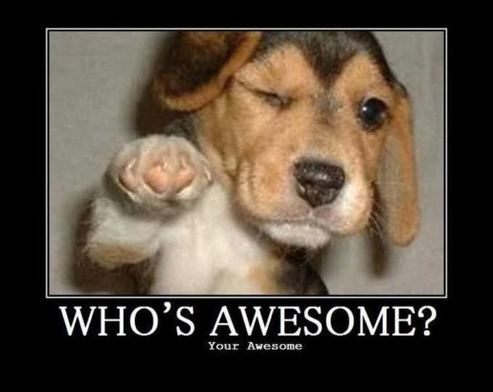 "101 best funny dog memes - ""Who's awesome? Your awesome."""