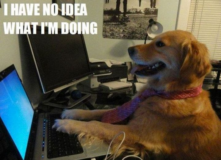 "101 best funny dog memes - ""I have no idea what I'm doing."""