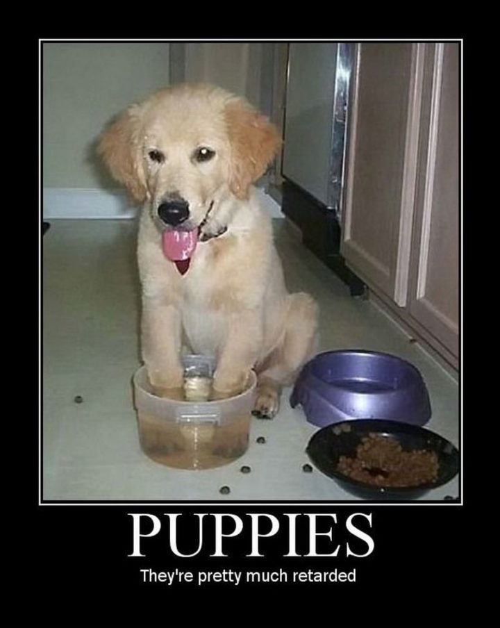"101 best funny dog memes - ""Puppies. They're pretty much retarded."""