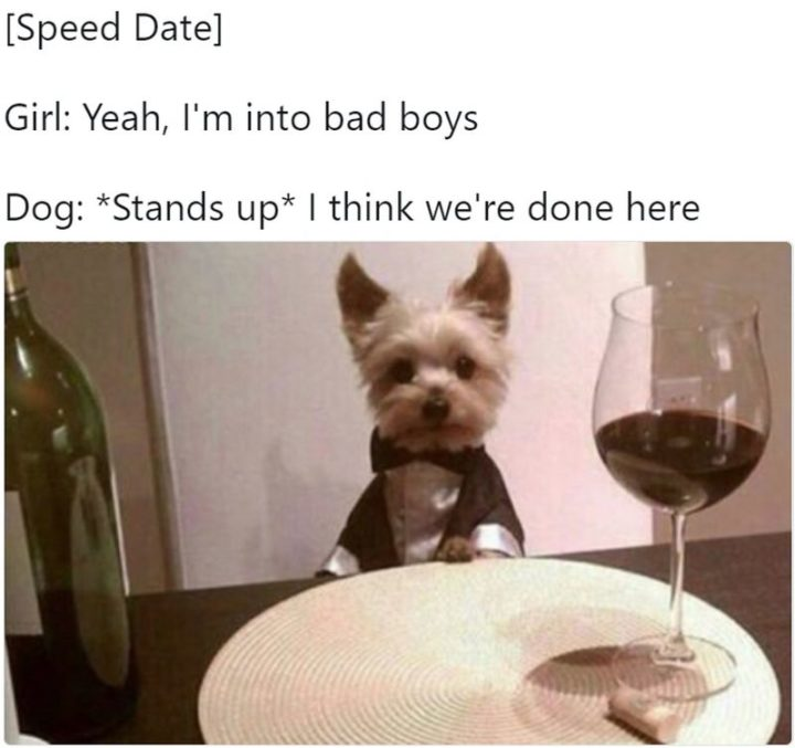 "101 best funny dog memes - ""Yeah, I'm into bad boys."""