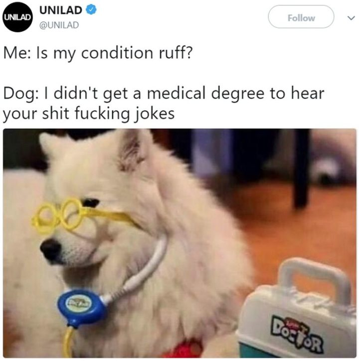 "101 best funny dog memes - ""Is my condition ruff?"""