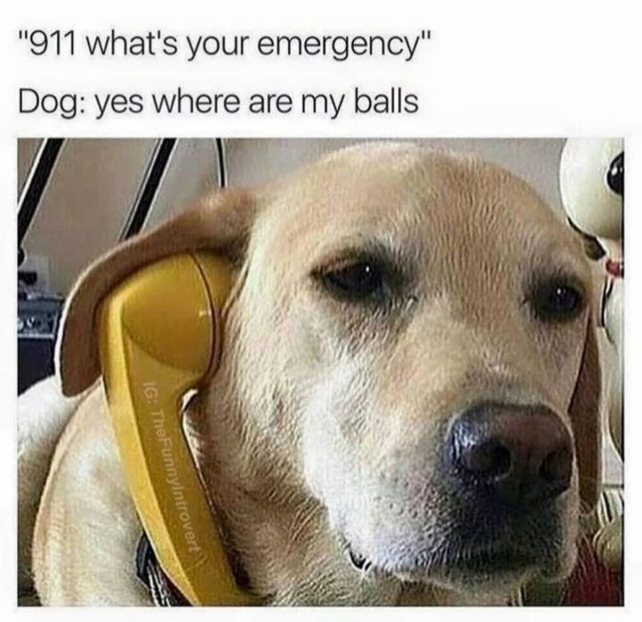 "101 best funny dog memes - ""911 what's your emergency?"""