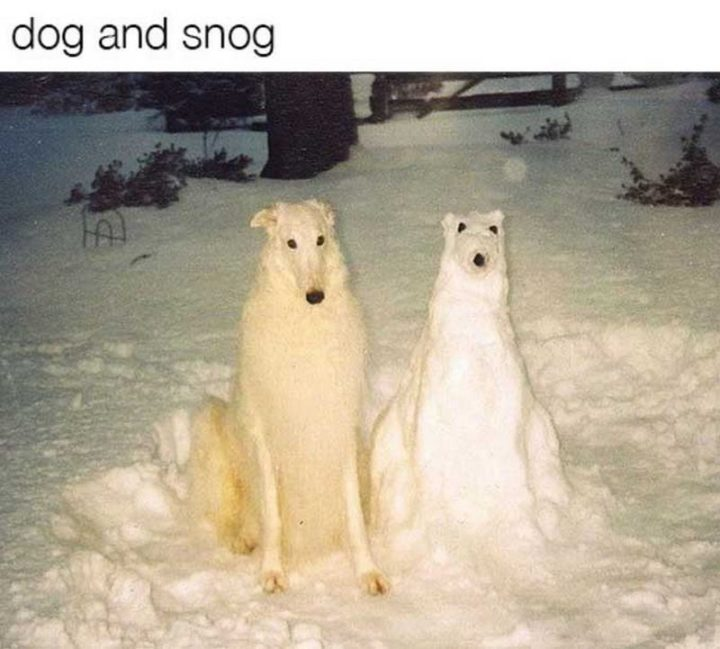 "101 best funny dog memes - ""Dog and snog."""