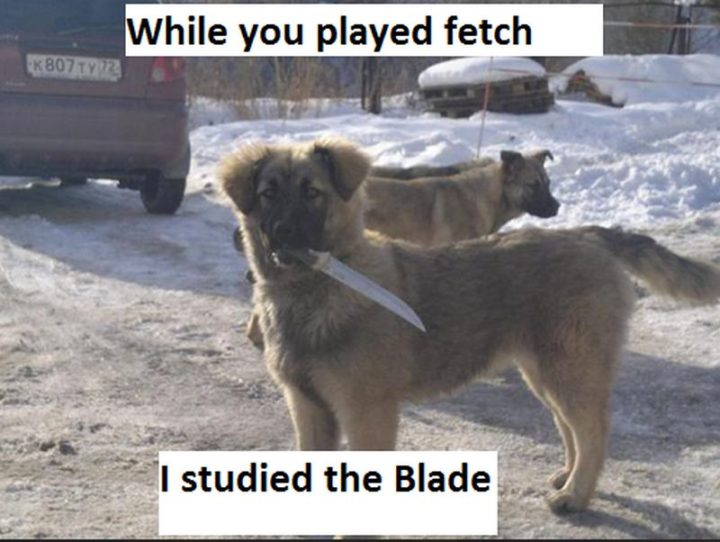 "101 best funny dog memes - ""While you played fetch, I studied the blade."""