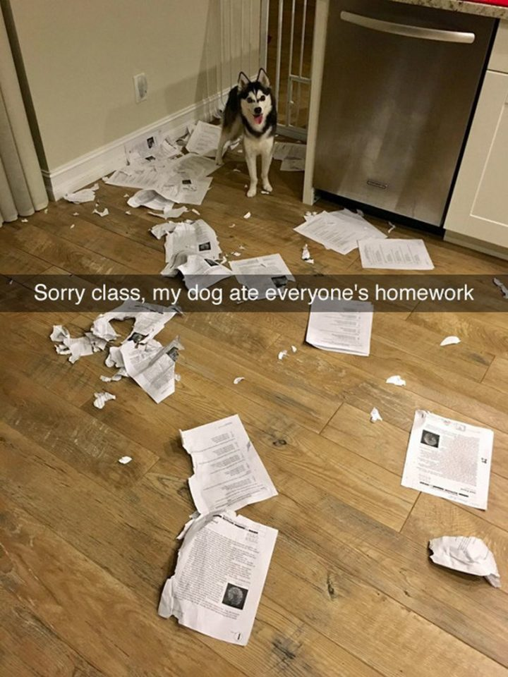 "101 best funny dog memes - ""Sorry class, my dog ate everyone's homework."""