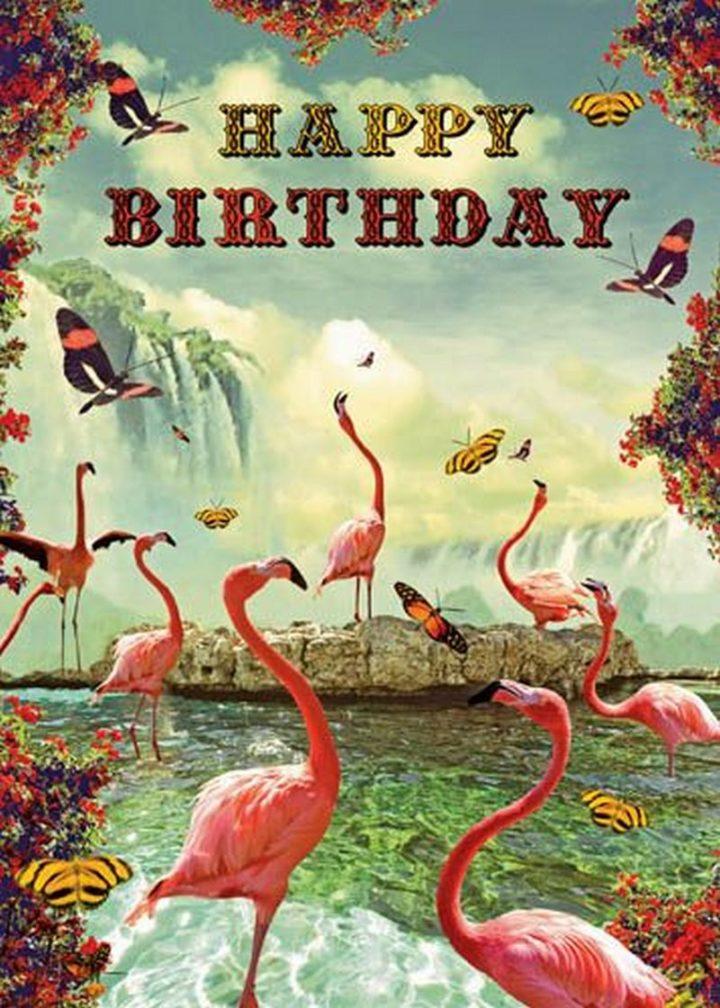 """101 Happy Birthday Memes - """"Happy Birthday."""""""