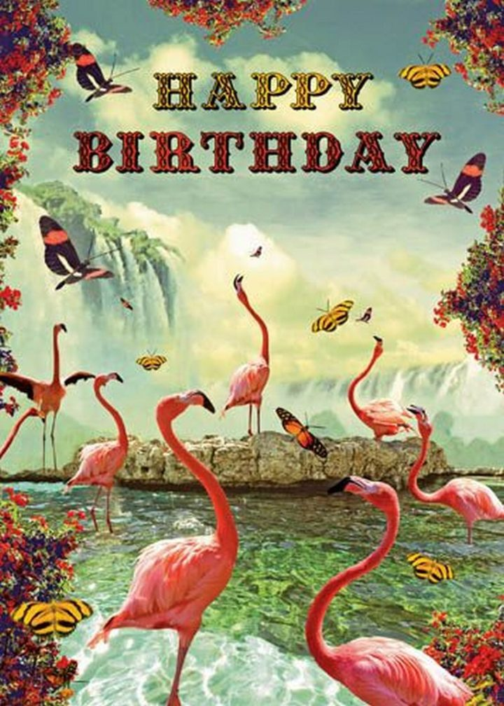 101 Happy Birthday Memes -