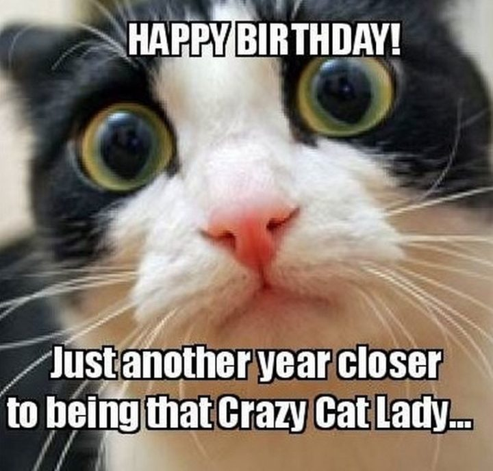 "101 Happy Birthday Memes - ""Happy birthday! Just another year closer to being that crazy cat lady..."""