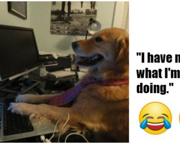 101 Best Funny Dog Memes to Make You Laugh All Day.