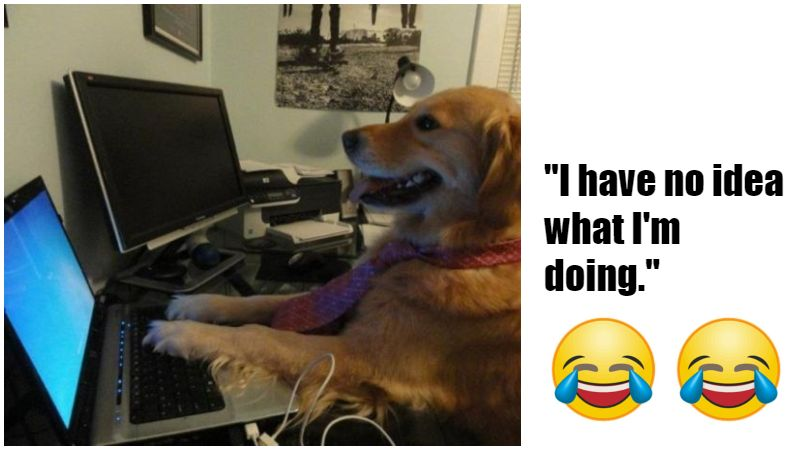 101 Best Funny Dog Memes To Make You Laugh All Day Many take the form of image macros and often feature edits to the doge image for the purposes of dark or. 101 best funny dog memes to make you