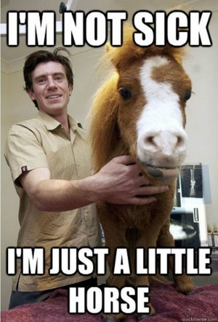 "23 Sick Memes - ""I'm not sick, I'm just a little horse."""