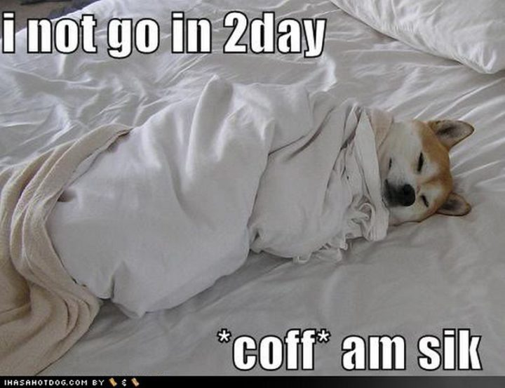 "23 Sick Memes - ""I not go in 2day *coff* am sik."""