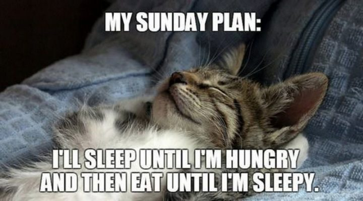 """""""My Sunday plan: I'll sleep until I'm hungry and then eat until I'm sleepy."""""""