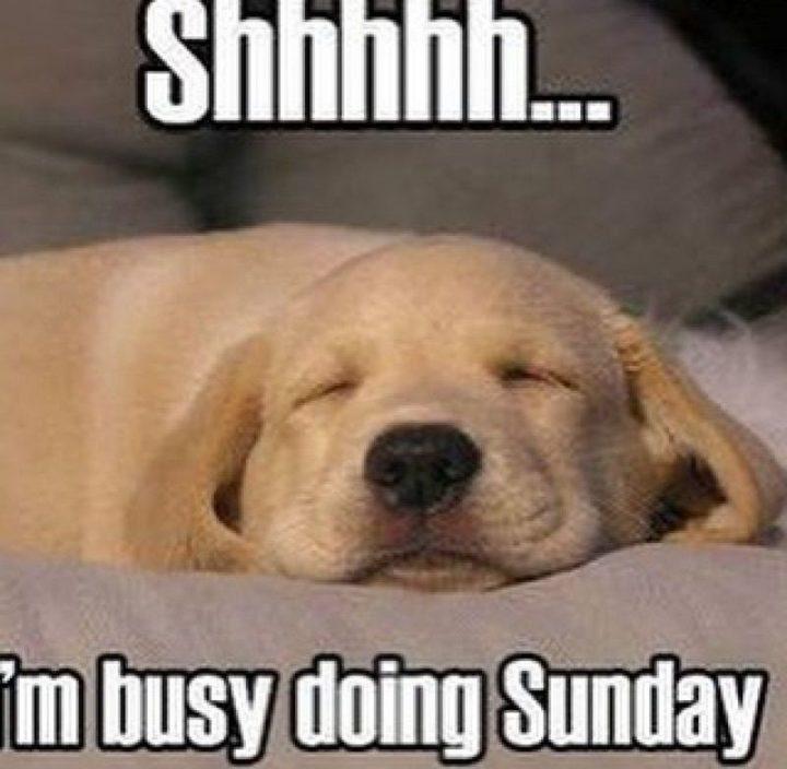 27 Funny Sunday Memes - Zzzzzz...