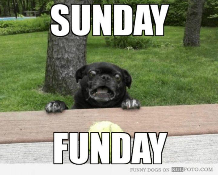 27 Funny Sunday Memes - Give it up for Sunday Funday!