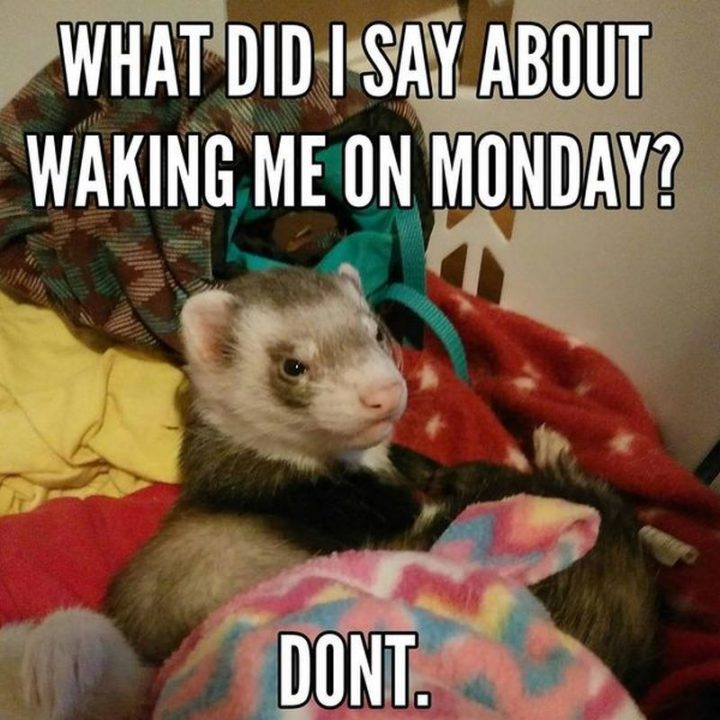 10 INEVITABLE Monday Memes To Start Your Week