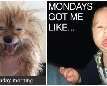 Top 65 Monday Memes to Help You Make It Through the Day