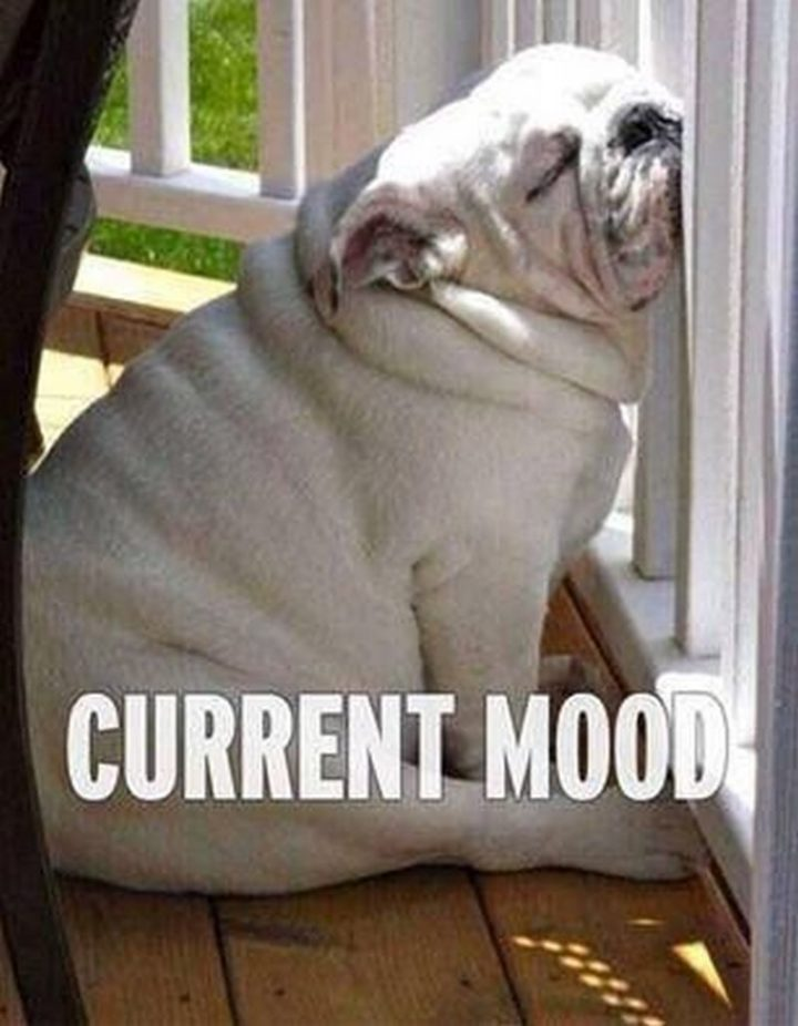 "37 Best Exhausted Memes - ""Current mood."""