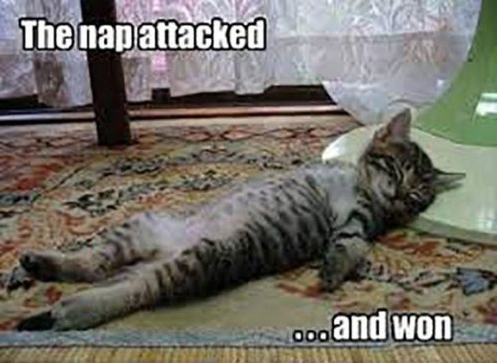 "37 Best Exhausted Memes - ""The nap attacked...and won."""