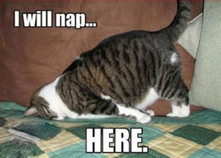 "37 Best Exhausted Memes - ""I will nap...here."""