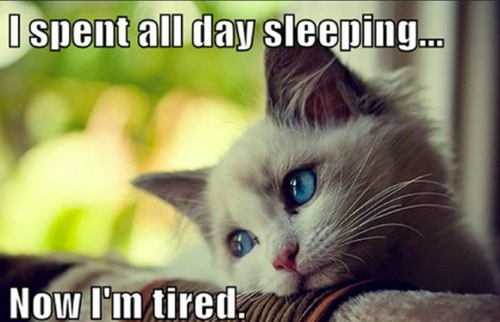 "37 Best Exhausted Memes - ""I spent all day sleeping...now I'm tired."""