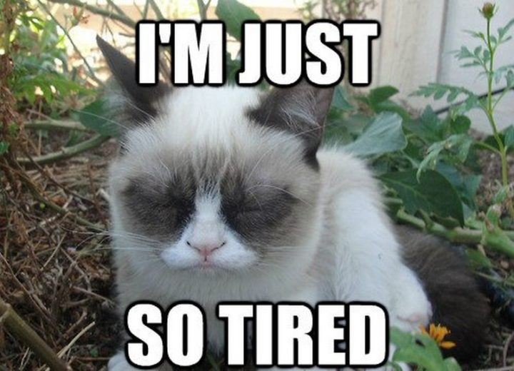 "37 Best Exhausted Memes - ""I'm just so tired."""