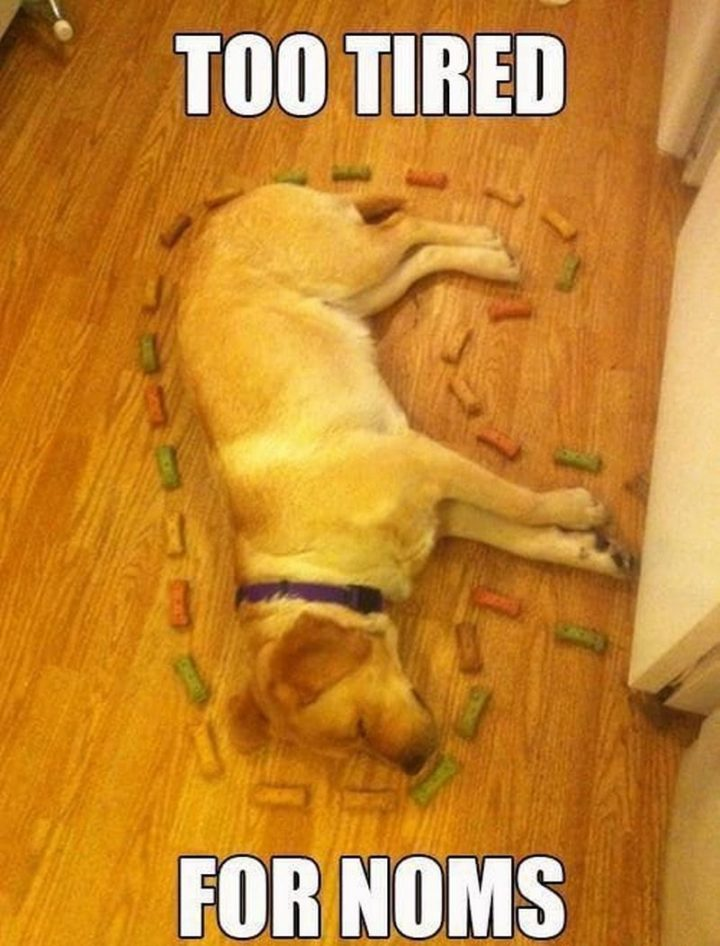 "37 Best Exhausted Memes - ""Too tired for noms."""