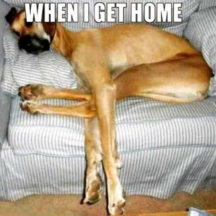 "37 Best Exhausted Memes - ""When I get home."""