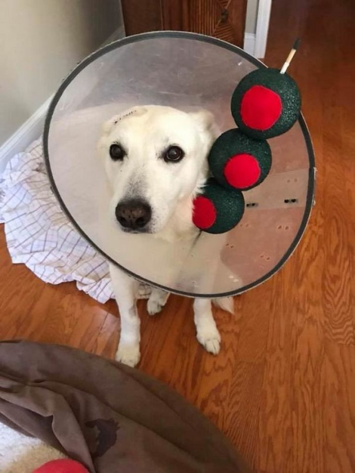 "49 Halloween Costume Ideas - ""Since he has to wear a cone, my friend's dog is a martini for Halloween."""