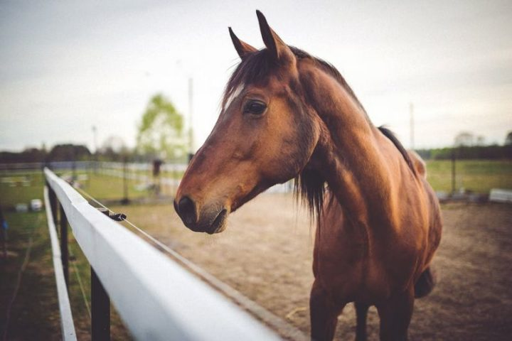 27 Amazing Animal Facts - Horses use their ears, nostrils, and eyes to create distinct facial expressions to communicate with other horses.