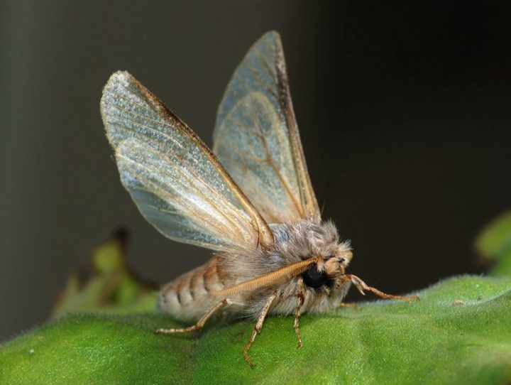 27 Amazing Animal Facts - A moth can detect and follow the scent of its mate from several miles away.