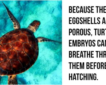 27 Amazing Animal Facts That Prove the Animal Kingdom Is Incredible.