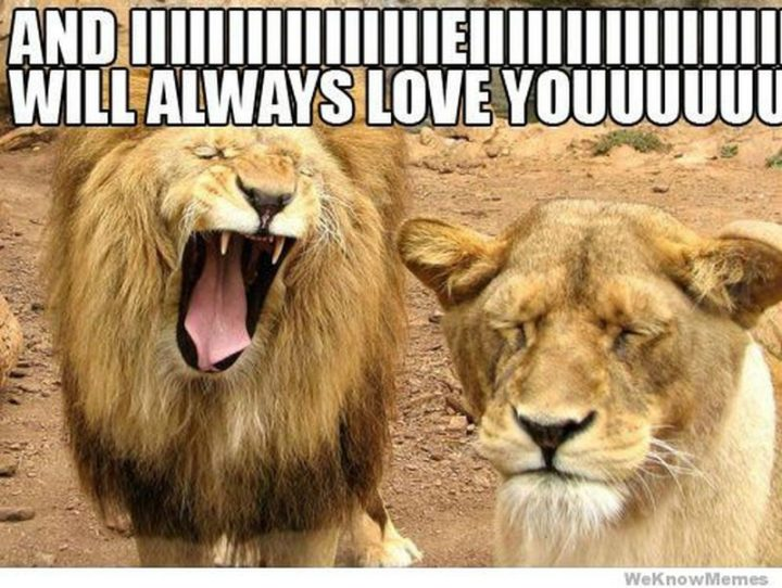 "101 I Love You Memes - ""And IIIIIIIIIIIIIIIIEIIIIIIIIIIIIIIIII will always love youuuuuu."""