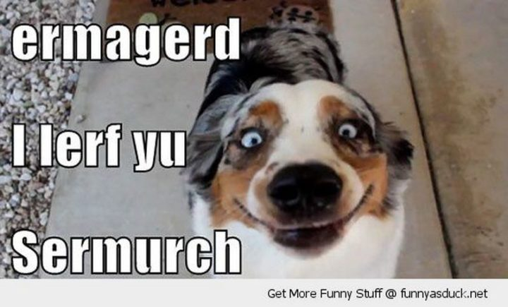 "101 I Love You Memes - ""Ermagerd, I lerf yu sermurch."""