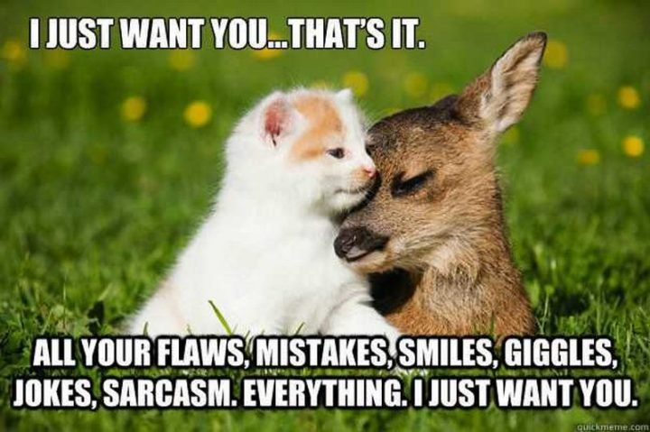 "101 I Love You Memes - ""I just want you...that's it. All your flaws, mistakes, smiles, giggles, jokes, sarcasm. Everything. I just want you."""