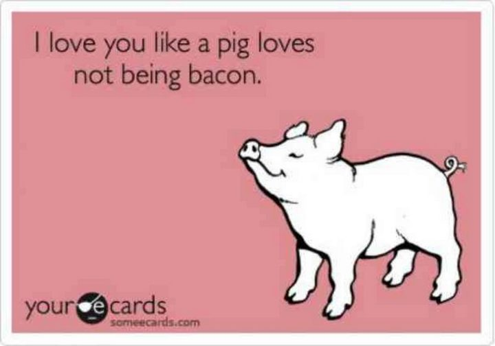 "101 I Love You Memes - ""I love you like a pig loves not being bacon."""