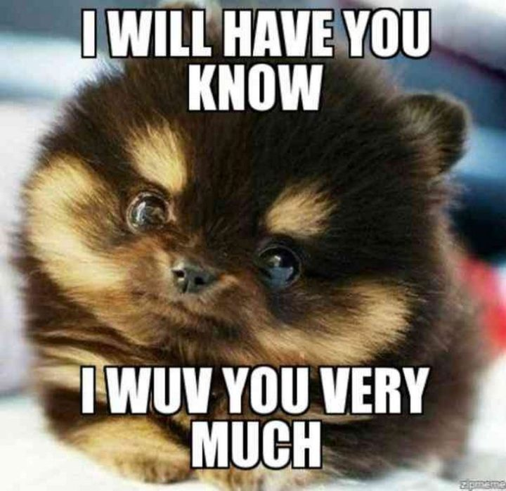 "101 I Love You Memes - ""I will have you know, I wuv you very much."""