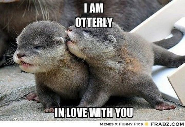 "101 I Love You Memes - ""I am otterly in love with you."""