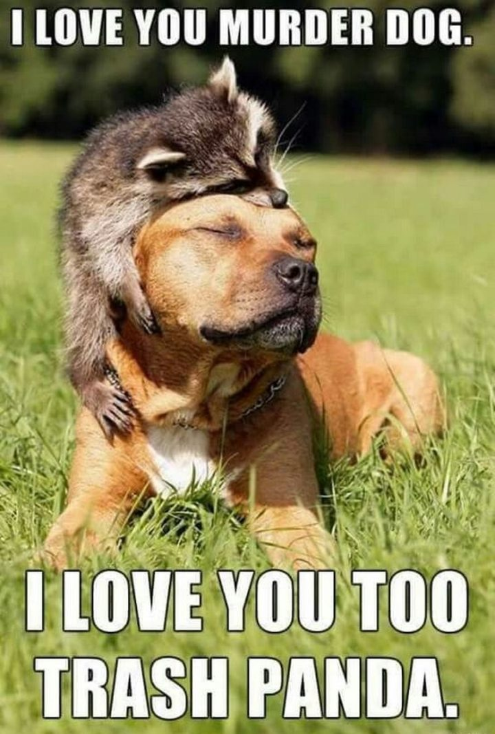 "101 I Love You Memes - ""I love you murder dog. I love you too trash panda."""