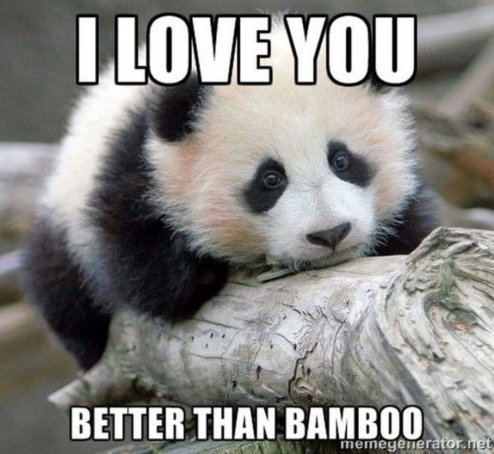 "101 I Love You Memes - ""I love you better than bamboo."""