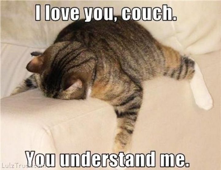 "101 I Love You Memes - ""I love you, couch. You understand me."""