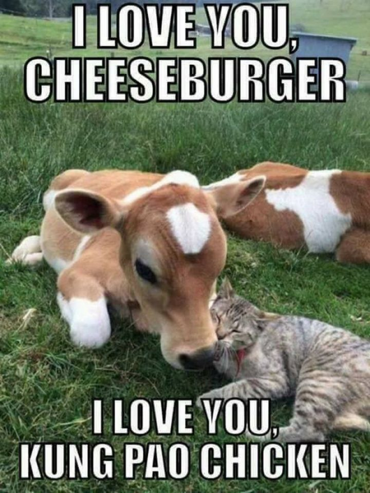 "101 I Love You Memes - ""I love you, cheeseburger. I love you, Kung Pao chicken."
